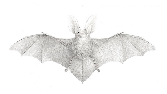 Deep Learning, IoT Sensor Data…and Bats!