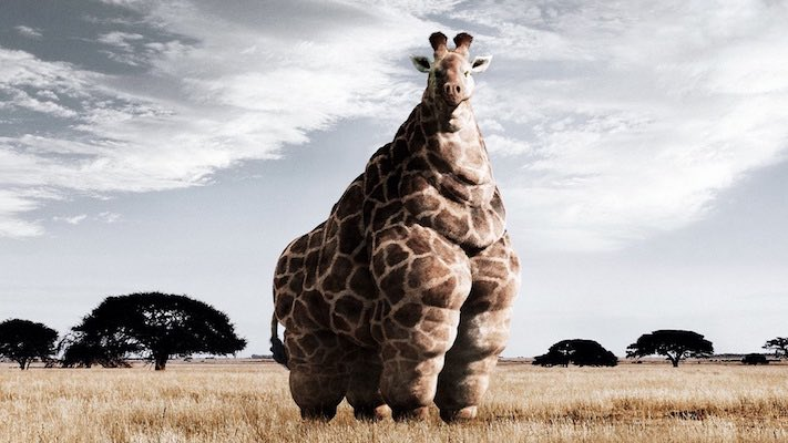 Giraffe-animal-funny
