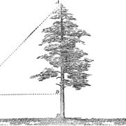 Expected Value of the Diameter of a Tree
