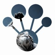 CatBoost: Yandex's machine learning algorithm is available free of charge