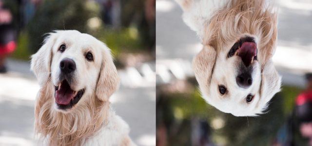 Image Augmentation for Convolutional Neural Networks