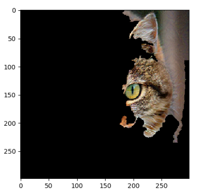 Computer Vision example with cats