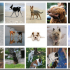 GANs: A Brief Theory and Practice, and Image-to-Image Conversion with Pix2Pix